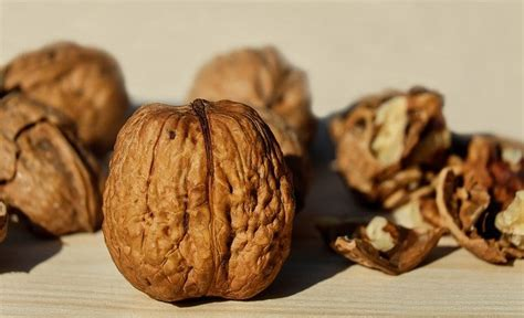 photo walnut nut brown fruit bowl  image  pixabay