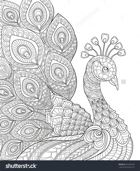 pages for adults beautiful peacock coloring pages for adults peacock