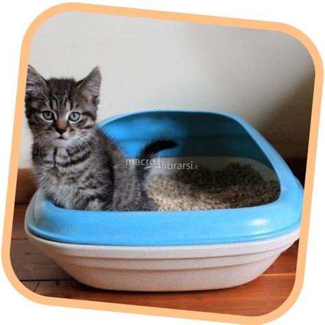 lettiere per gatti lettiera per gatti beco pets