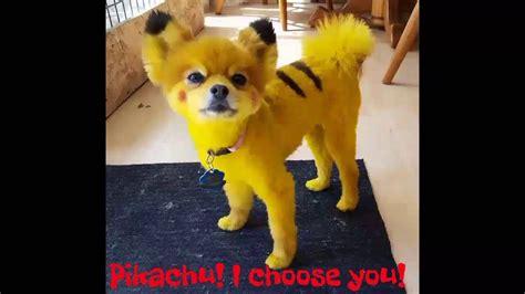 pikachu puppy pok 233 mon go looks like pikachu