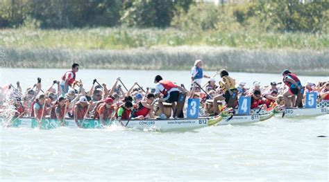 vancouver international dragon boat festival 2017 32 free things to do in vancouver this august daily hive