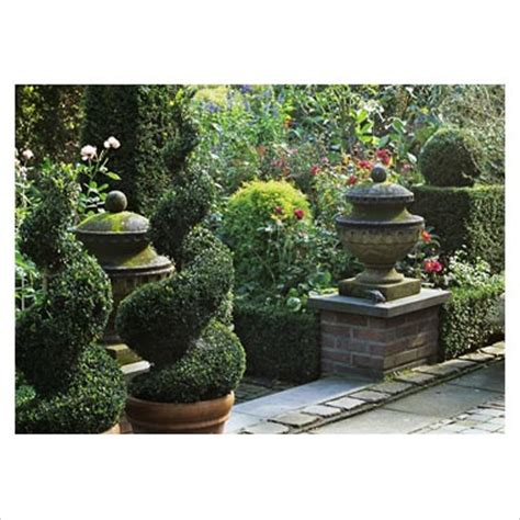 plants for formal gardens gap photos garden plant picture library formal