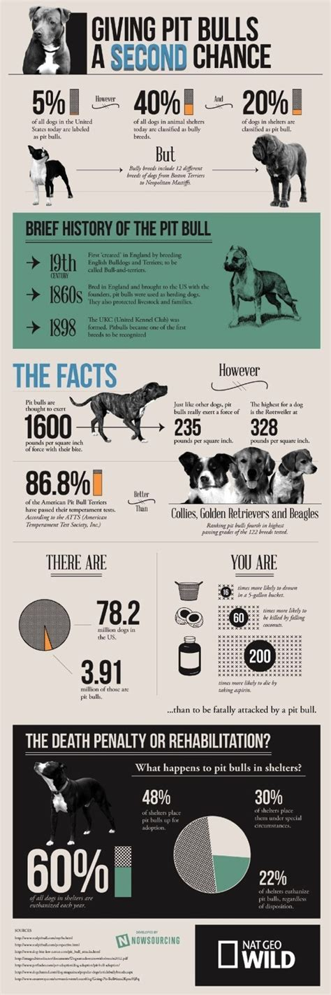 pitbull facts pit bull facts and why we this breed caninejournal