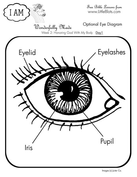 printable coloring pages eyes eye coloring page interior design ideas