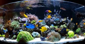 Types Of Aquarium by Types Of Saltwater Aquariums The Aquarium Setup