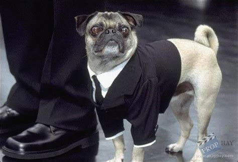 mib pug frank the pug agency suit wardrobe from in black ii 2002