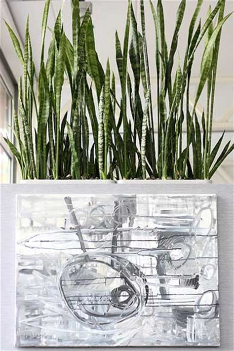 schlafzimmer pflanzen feng shui feng shui mit pflanzen f 252 r esszimmer blumen v 246 gele