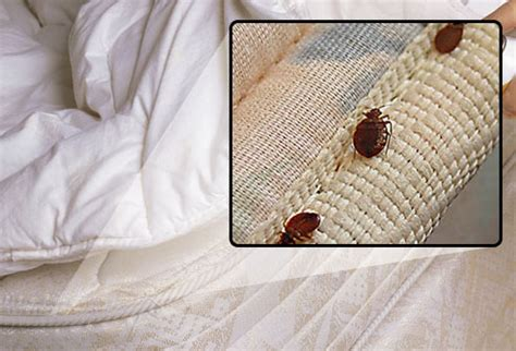 what to look for in a mattress what do bed bugs look like can you see them