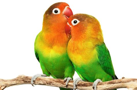 Imagenes De Love Birds | gratitude is altitude