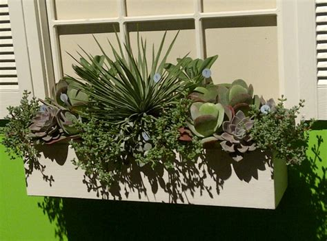 succulent window box 17 best images about succulents in window boxes