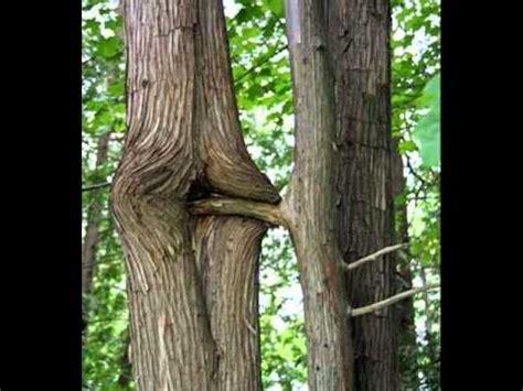 imagenes de hojas raras imagenes raras youtube