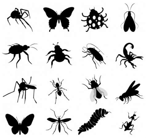 Kumbang Set by Set Serangga Hitam Vektor Hewan Vektor Gratis Gratis