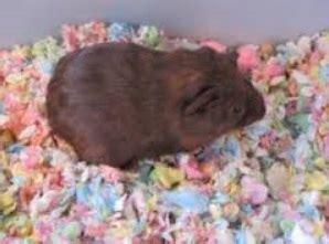 cheap guinea pig bedding cheap guinea pig bedding endearing best 25 guinea pig bedding ideas on pinterest