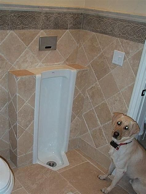 home urinals for the bathroom the urinals of dave s house home search map gallery top 10 urinals top 1000 urinals