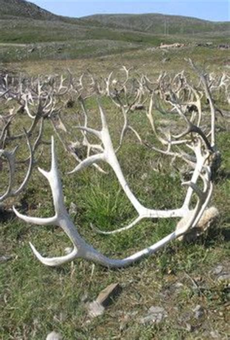 Horns Garden Sheds by 17 Best Images About Amazing Horns On Horns