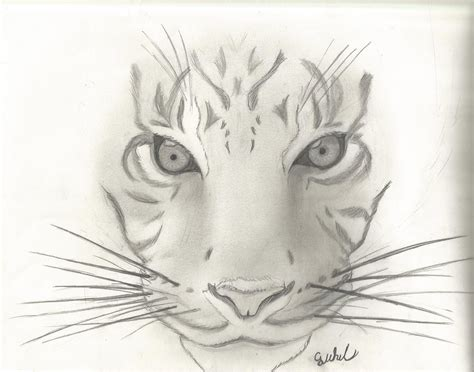 I Sketches by Animal Sketch 1 Tiger By Cjwhit On Deviantart
