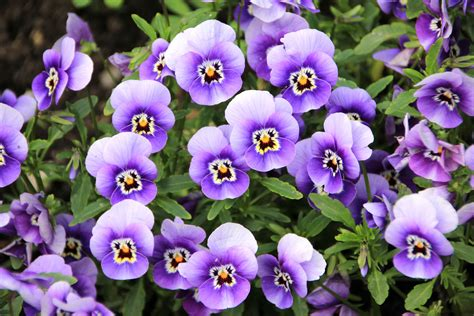 curarsi con i fiori di bach floriterapia e possibile curarsi con i fiori