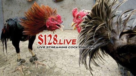 Anakan Ayam Bangkok Berkualitas cara memilih bibit anakan ayam bangkok berkualitas s128