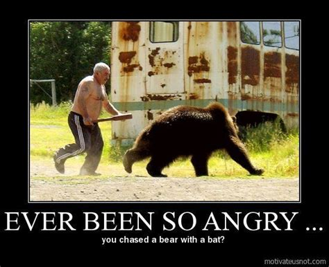 Funny Angry Memes - have you ever been so angry meme funny angry bear lol