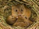 sognare topi nel letto topi nei sogni