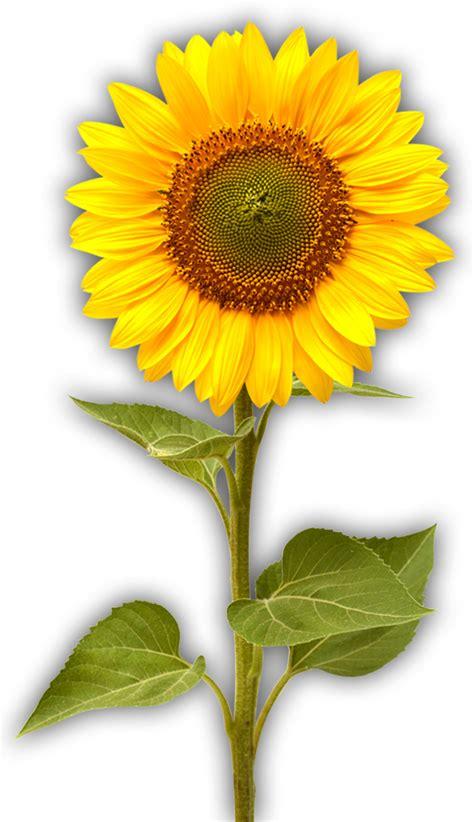 sunflower farm b amp b