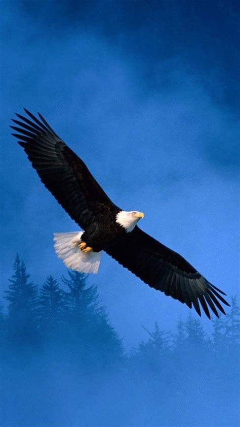 eagle mobile wallpapers wallpics