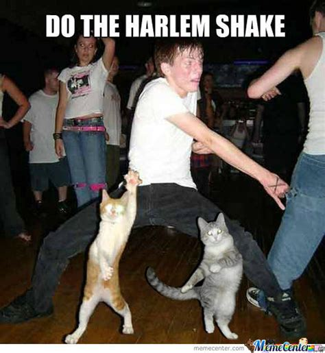 Harlem Shake Meme - harlem shake cat edition by sheeppusher meme center