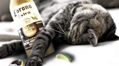 cats  drink  good stuff corona extra funny faxo