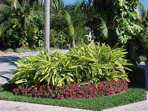 variegated ginger provides beautiful contrast color for landscape designs my unique garden