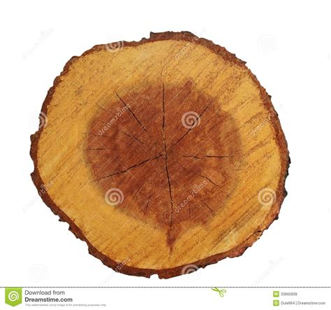 Tree Trunk Cross Section by Cross Section Of Acacia Tree Trunk Isolated Royalty Free Stock Images Image 33665839