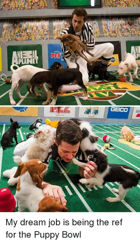 puppy pers 25 best memes about puppy bowl puppy bowl memes
