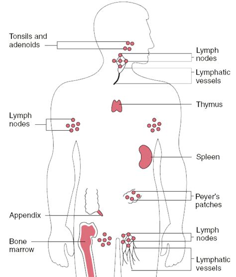 barcalounger recliner mechanism diagram pin lymphatic syste page 10 health and wellness