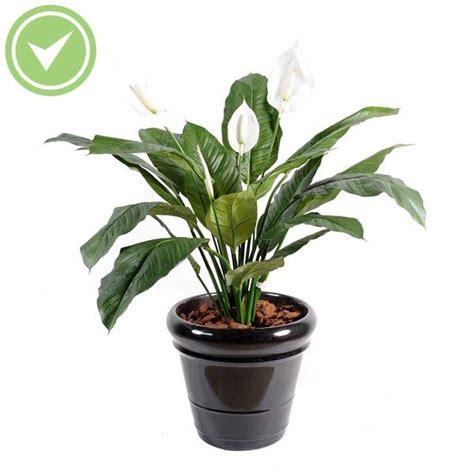 Plante Verte D Intã Rieur Pas Cher Plante Verte D Interieur Pas Cher Atlub