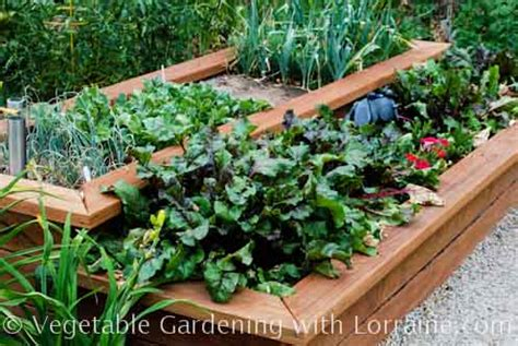 vegetable bed beautiful raised vegetable gardens house decor ideas