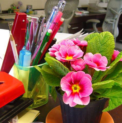 floreros para oficina la casa de los mart 237 nez flores y plantas en nuestro