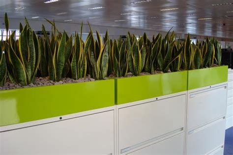 plant partition containers planter boxes gaddys indoor plant hire