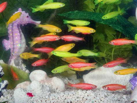 types of aquarium fish image gallery home aquarium fish types