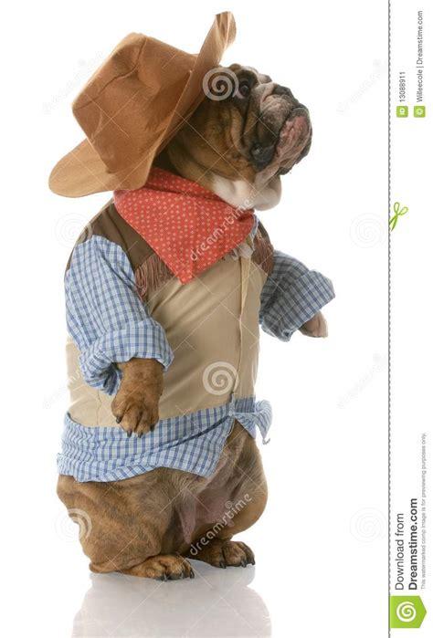 dog dressed    cowboy stock image image