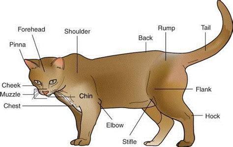 cat sections exam 1 at blinn college studyblue