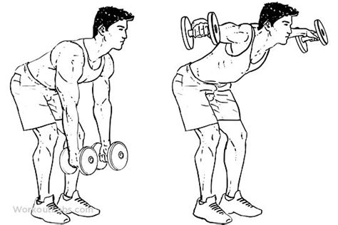 bent over lateral raises on incline bench dumbbell bent over lateral rear delt raises flyes spor pinterest exercise
