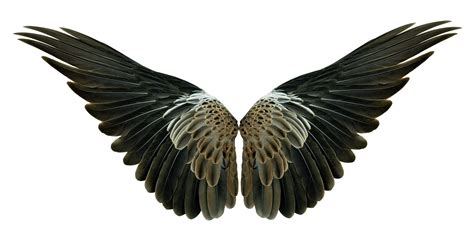 Wings Of A wings pinion on the sprawling white custom wallpaper