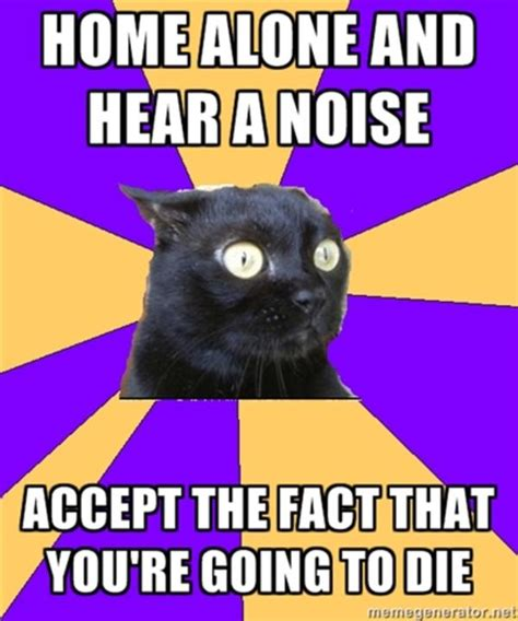 Anxiety Cat Memes - image 221919 anxiety cat know your meme