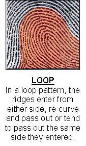 pattern definition for science are fingerprint patterns inherited
