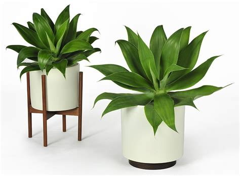 in door plants pot video three four plants argements case study cylinder plant pot with stand modernica pot