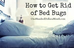 how to get rid of bed bugs at home how to get rid of bed bugs