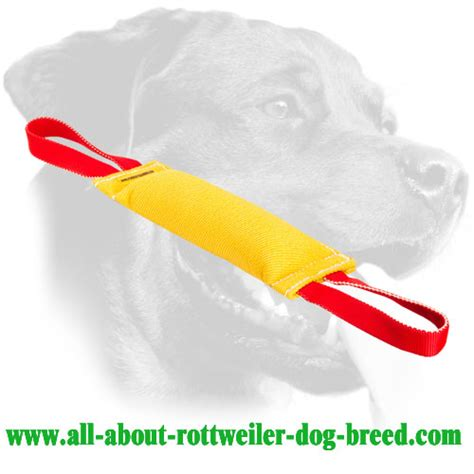 all about rottweilers rottweilers and leather on