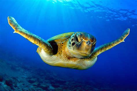 best dive spots top diving spots in africa timbuktu