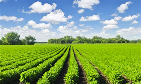 Can Soybeans Be Planted To Detox Land by Advancing Responsible Lending Projects Wwf