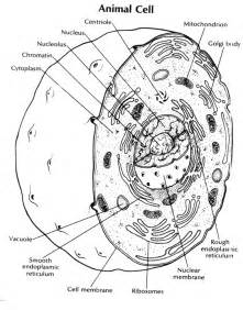 animal cell coloring answer key free coloring pages of animal cell diagram