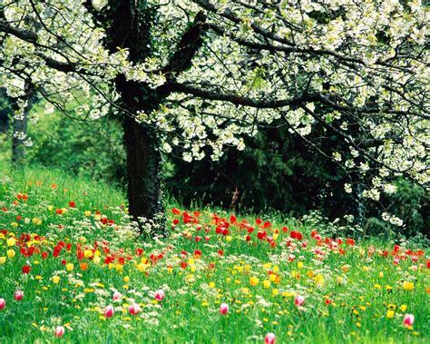 khoobsurat wallpaper flower spring forest flowers wallpaper for 1600x1280